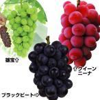 果樹苗 大粒ブドウセット 3種3株