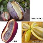 果樹苗 アケビセット 3種3株