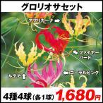 春植え球根 グロリオサセット 4種8球