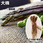 山菜苗 アスパラガス 大株満味紫アスパラガス 5株