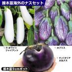 接木野菜苗 ナス 海外のナスセット 3種6株(各2株)