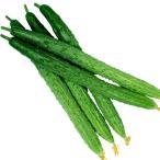 野菜たね キュウリ F1味良スーヨー 1袋(1ml)