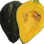 野菜たね カボチャ シルキースイート 1袋(5ml) / 種 タネ