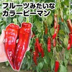 野菜たね ピーマン F1パレルモRZ 1袋(8粒) / タネ 種