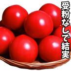 野菜たね トマト F1パルト 1袋(14粒)