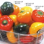 野菜たね ピーマン F1セニョリータレッド 1袋(10粒)