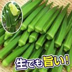 野菜たね オクラ F1おいしいオクラ 1袋(10ml)