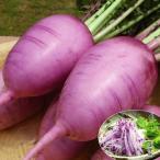 野菜たね ダイコン F 1 味いちばん紫 1袋(50粒)
