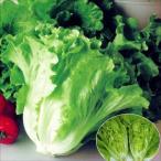 野菜たね レタス サラダレタス 1袋(5ml)