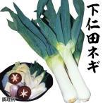 種 野菜たね ネギ 下仁田ねぎ 1袋(10ml) / 野菜のタネ 野菜 種子 葱 ねぎ 【YTC40】 国華園