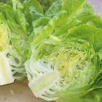 野菜たね レタス パリクック 1袋(100粒)