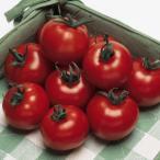 野菜たね タキイ交配 フルティカPVPトマト 1袋(18粒)
