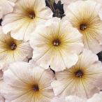 花たね ペチュニア バタークリーム 1袋(20粒) / タネ 種