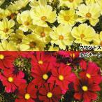 花たね コスモス 美色コスモスセット 2種2袋