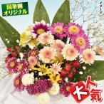 花たね キク 洋風切花向き菊ミックス 1袋(56粒)