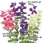 花たね サルビア マーブルアーチセットセット 3種3袋