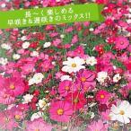 花たね コスモス スペシャルミックス 1袋(50g)