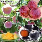 果樹苗 スモモ 貴陽&バイオチェリー(受粉樹) 2種2株