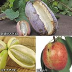 果樹苗 アケビ&ムベセット 3種3株