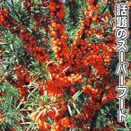 果樹苗 サジー ゴールデンスイートTM 3株 / 果物苗 フルーツ苗