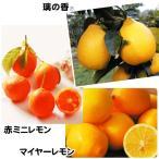 果樹苗 カンキツ おすすめレモンセット 2種2株