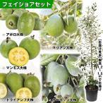 果樹苗 フェイジョアセット 5種5株