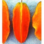 果樹苗 トロピカルフルーツ スターフルーツ カレー 1株 / 果物 フルーツ苗