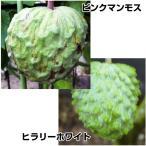 果樹苗 トロピカルフルーツ アテモヤセット 2種2株