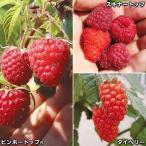 果樹苗 キイチゴ 美味キイチゴセット 3種3株
