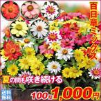 百日草 ザハラミックス 100粒 送料無料