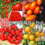 送料無料 接木野菜苗 ミニトマト味比べセット 4種8株