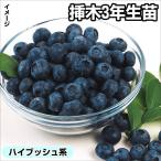 送料無料 果樹苗 ハイブッシュ系おすすめブルーベリーセット 2種2株
