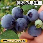 送料無料 果樹苗 サザンハイブッシュ系おすすめブルーベリーセット 2種2株