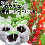 野菜たね トマト F1 CFプチぷよ 1袋(10粒)と培養土ポットジフィーセブン10個
