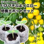 野菜たね トマト F1 CFプチぷよイエロー 1袋(10粒)と培養土ポットジフィーセブン10個