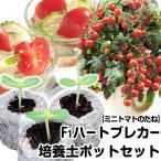 野菜たね トマト F1ハートブレカー 1袋(10粒) と培養土ポット ジフィーセブン10個