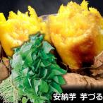 安納芋 イモヅル 10本 苗 さつまいも 切り苗