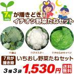 送料無料 野菜たね 7月蒔どき国華園イチオシ野菜たねセット 3種3袋