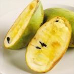 果樹苗 ポポー NC-1 1株
