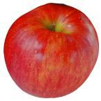 果樹苗 リンゴ シナノスイート 1株