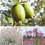 送料無料 果樹苗 花も実も楽しめる果樹セット 3種3株