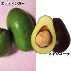 果樹苗 アボカド 耐寒アボカドセット 2種2株
