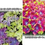 ショッピングアジサイ 花木 変わりアジサイセット 2種2株