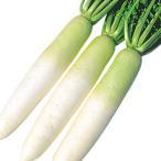 種 野菜たね ダイコン F1強健総太り大根 1袋(5ml)