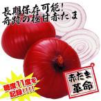 種 野菜たね タマネギ 中華妃 1袋(5ml入) 赤たまねぎ 貯蔵/タネ たね たまねぎ 玉ねぎ 玉葱 玉ネギ