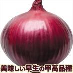 種 野菜たね タマネギ レッドグラマーPVP 1袋(4ml)