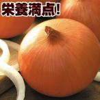 種 野菜たね タマネギ F1ケルたま 1袋(5.5ml)/タネ たね たまねぎ 玉ねぎ 玉葱 玉ネギ