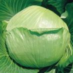 野菜たね 種 イタリア野菜 キャベツ ブランスイッチ 1袋(3ml) / 野菜の種 国華園