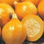 種 野菜たね 露地抑制栽培向き F1コリンキーP 1袋(5ml)