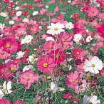 種 花たね コスモス 矮性コスモス混合 1袋(500mg)/タネ たね
